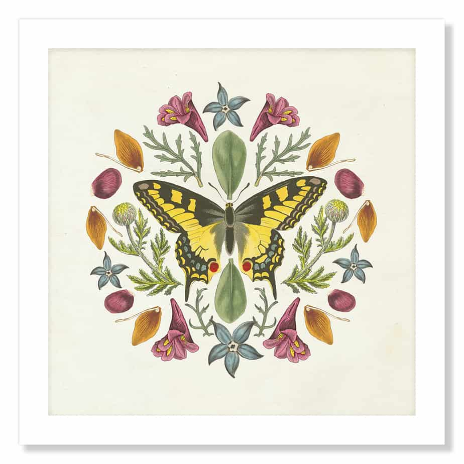 35995a Butterfly Mandala III v2 No Frame No Background 1