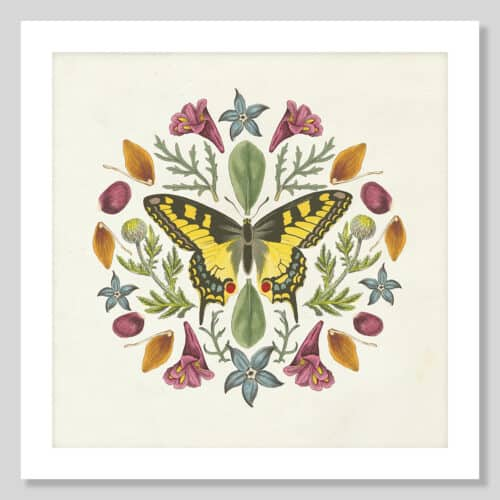 35995a Butterfly Mandala III v2 No Frame with Background 1