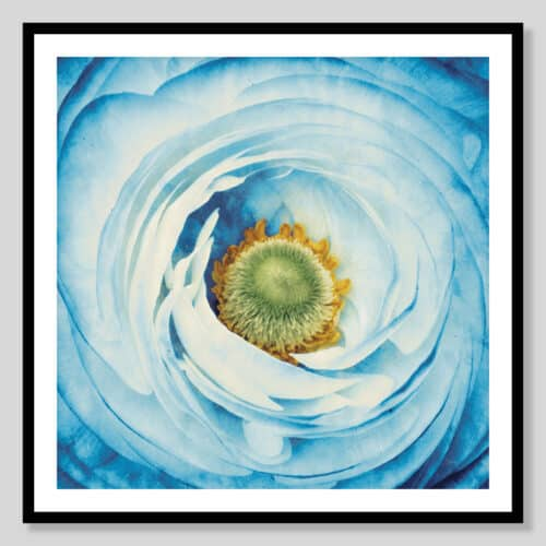 45211a White Peony with Blue Black Frame