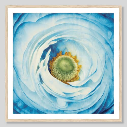 45211a White Peony with Blue Oak Frame
