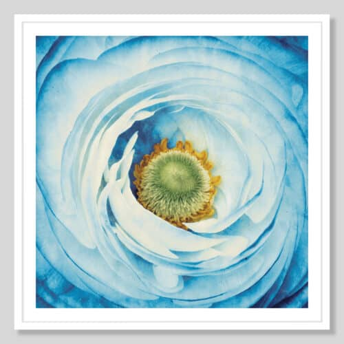 45211a White Peony with Blue White Frame